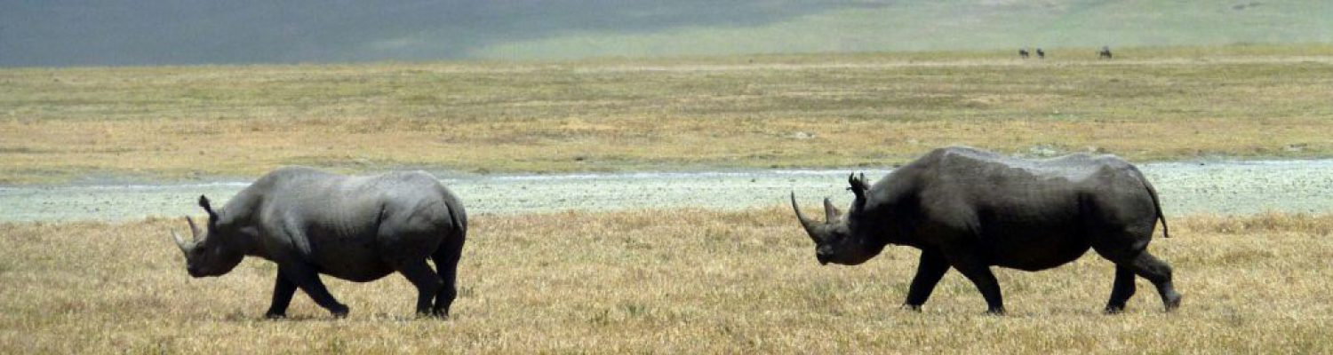 6 DAYS NORTHERN TANZANIA SAFARI