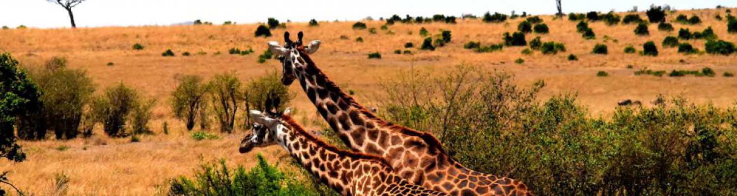 5 DAYS NORTHERN TANZANIA CAMPING SAFARI